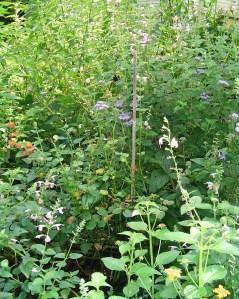 September 7 garden 027