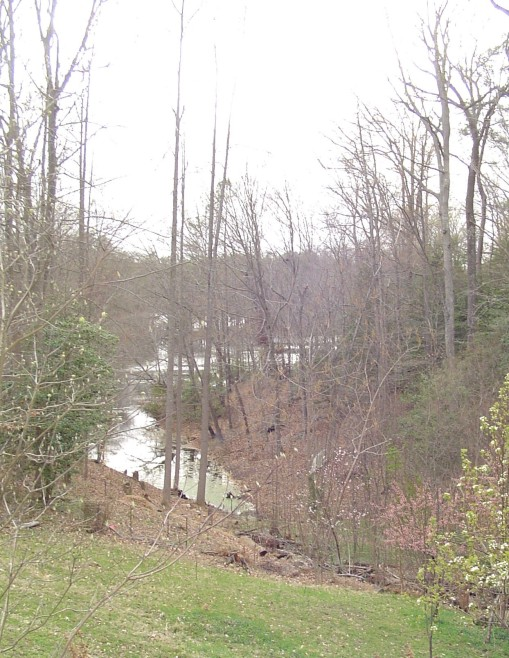 The deer live in the wooded ravines in our neighborhood, and are drawn to the lakes to drink.
