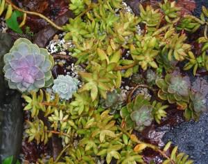 October 13 2013 garden in rain 008