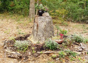 The stump garden before this week's upgrade.