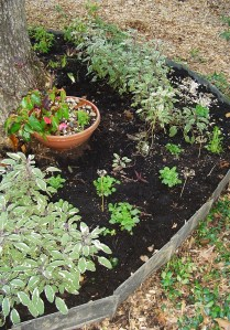 October 23 Stump garden 005