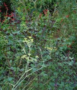 October 25 garden 035