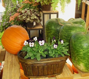 A display at Homestead Garden Center.