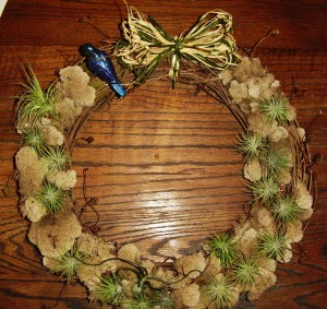 Grapevine wreath decorated with moss, air plants, and a blown glass bluebird.  By Woodland Gnome.