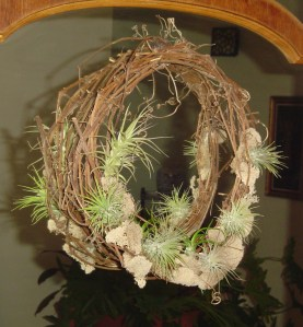 Air plants on a grapevine wreath, by Woodland Gnome.