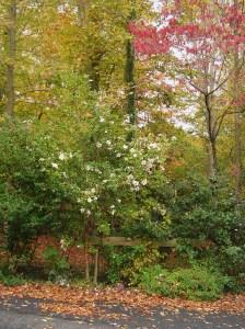 Nov 2 2013 garden 002