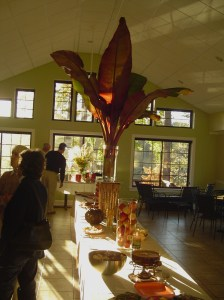 The trimmed banana leaves, dressed for our gathering in November