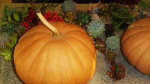 November 14 pumpkins 002