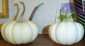 November 14 pumpkins 004