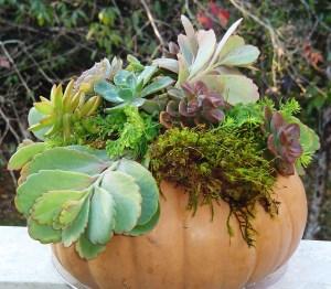November 14 pumpkins 007