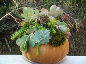 November 14 pumpkins 010