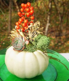 November 17 pumpkins 010