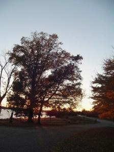 tree  on parkway