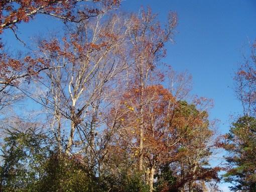 November 24 2013 trees 002