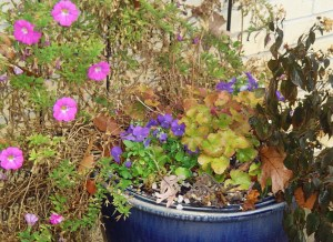 The petunias are still blooming, despite our nights in the 20s.  The Lantana is bitten by the frost, buy I hope the roots make it through until spring.