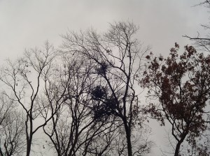 Our sky as the storm blows over us today.