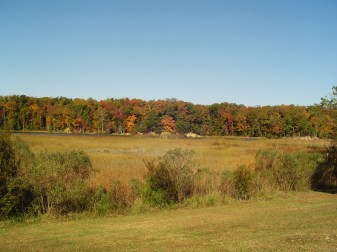 A marsh between Williamsburg and Jamestown