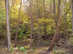 Woods near the old paper mill, outside of Colonial Williamsburg
