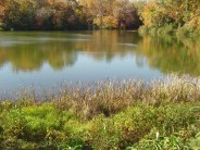 Cat tails line the bank of the pond. These are were an important food source for the Native Americans who lived here.