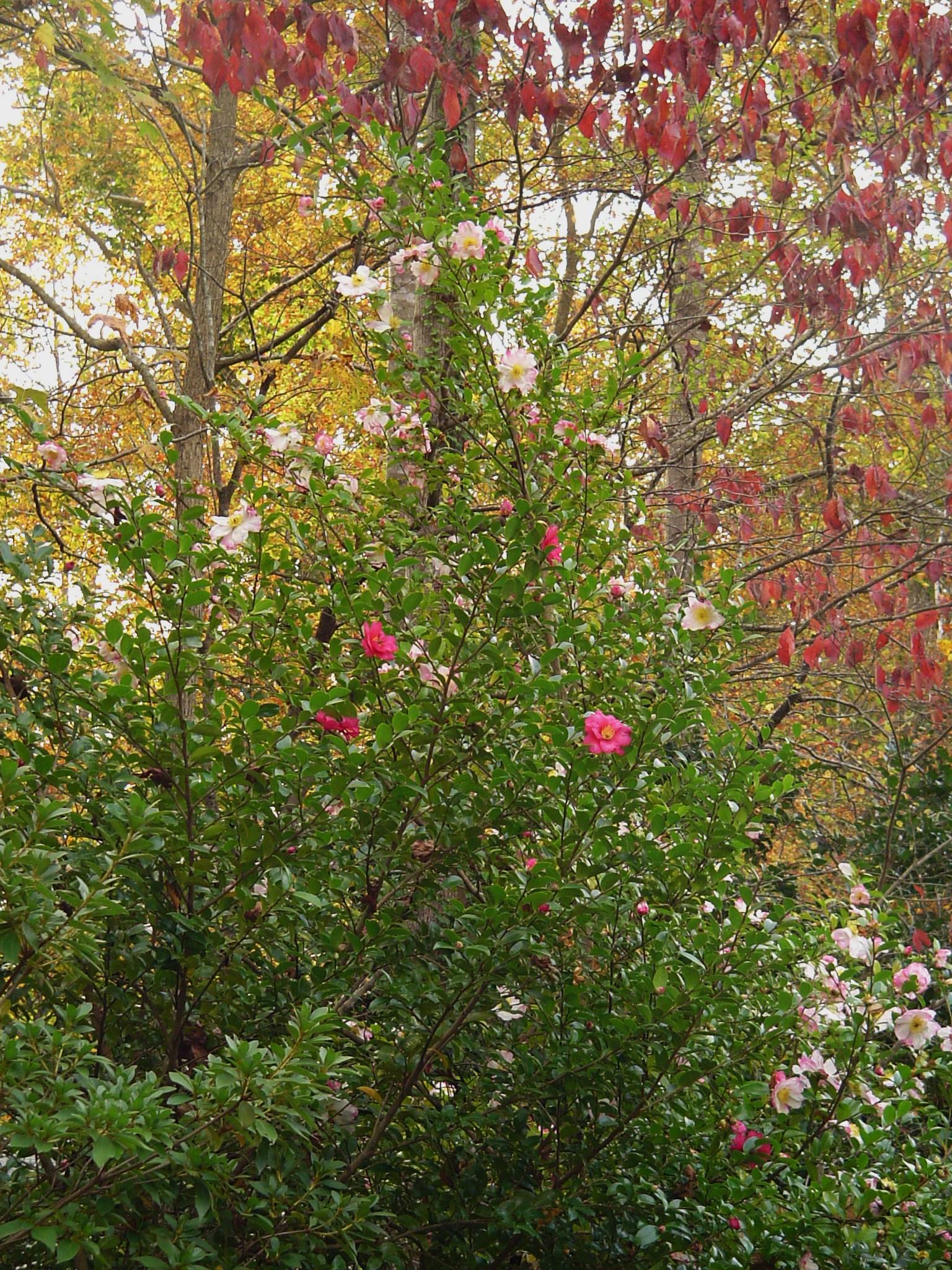 Williamsburg Virginia | Forest Garden | Page 3