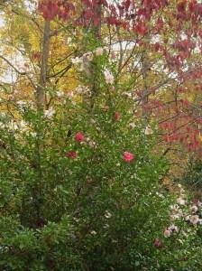 November 5 garden at dusk 003