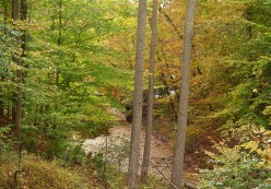 The pond at the end of our ravine