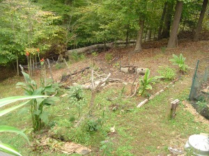 My friend has begun working on a new hugelkultur bed and will fill this area with shredded leaves, fallen branches, and other organic materials to prepare for spring planting.