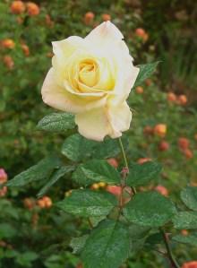 October 31 garden 009