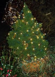 december 22 2013 lights 008