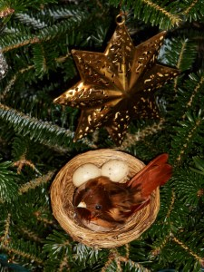 Birds always live in our Christmas tree.