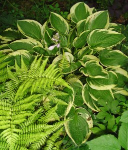 Hosta and ferns, always tempting in catalogs, perform best when purchased locally.