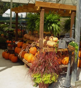 The Homestead Garden Center stocks a huge selection of beautiful plants.
