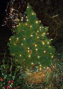 We will leave all Christmas lights burning until the temperatures warm above freezing again.  They small heat they generate will help the plants survive the cold.
