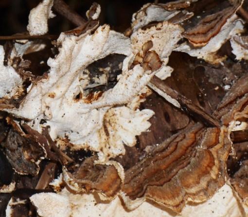 January 18 fungi 010
