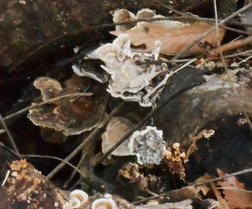 January 18 fungi 018