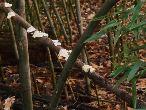 January 18 fungi 022