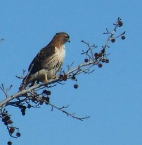 January 19 birds 007