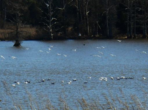 January 19 birds 037