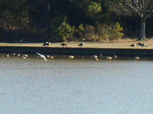January 19 birds 048