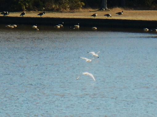 January 19 birds 049