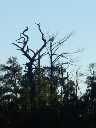 Trees on Jamestown Island