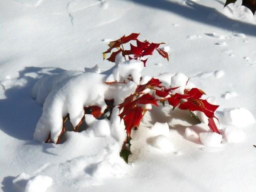 January 23 2014 snow 018