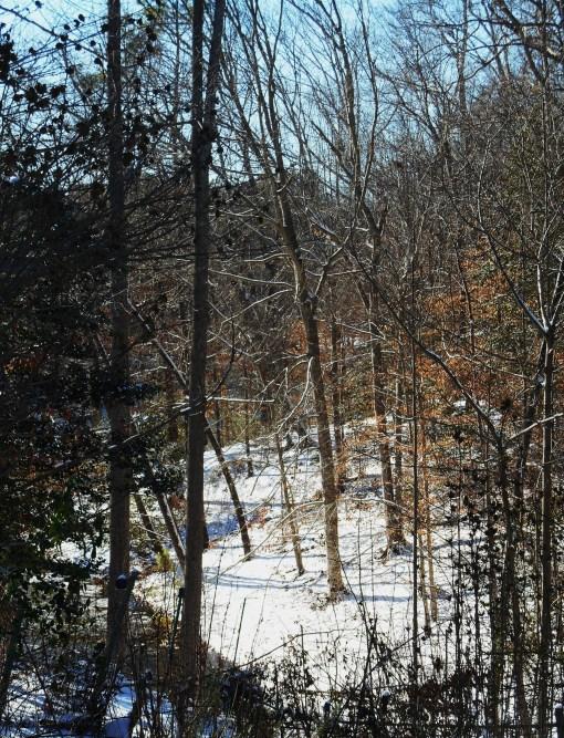 January 23 snow2 006
