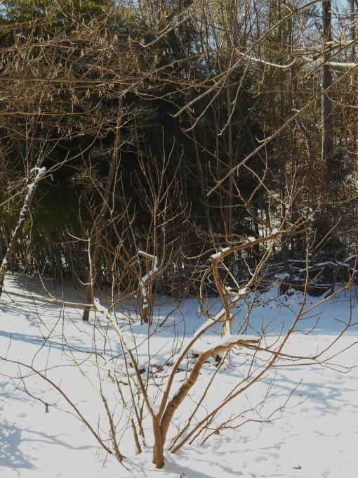 January 23 snow2 011