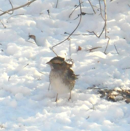 January 24 2014 birds 017