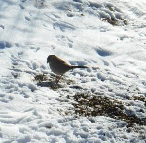 January 24 2014 birds 033