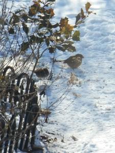 January 24 2014 birds 034