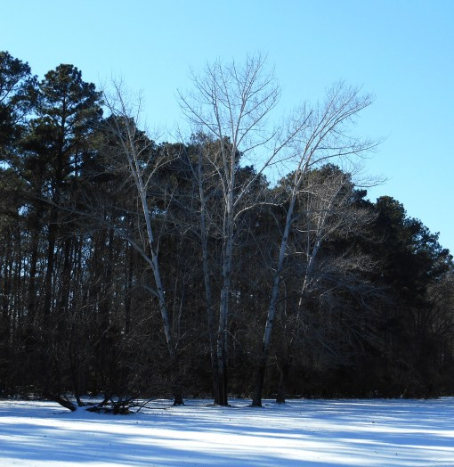 January 24 ice 039