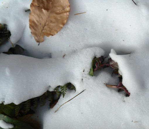 January 26 2014 ice 002