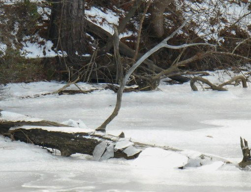 January 26 2014 ice 057